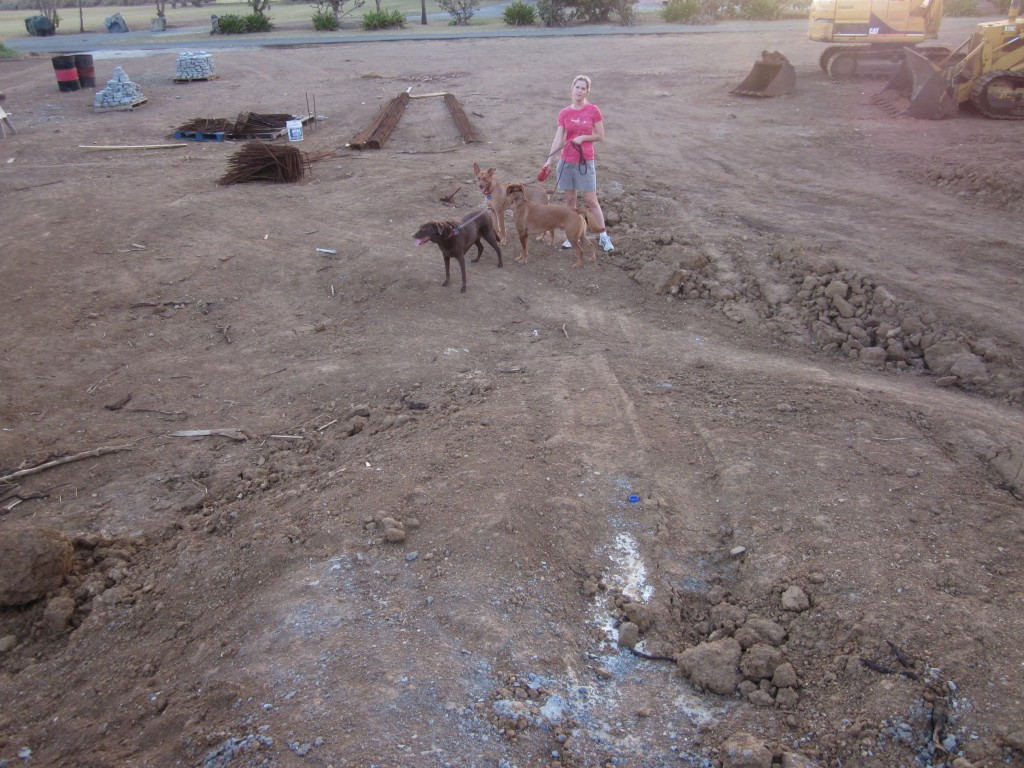 2-4-2011 - Emily and the dogs checking on the progress